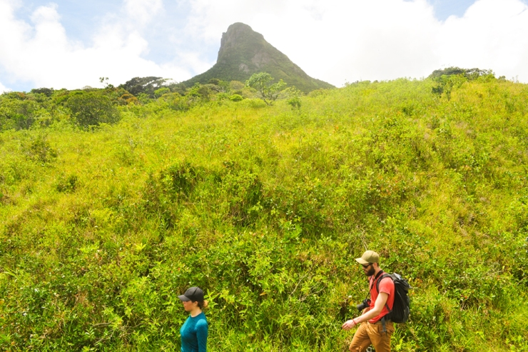 A young couple hiking through thick yellow-green vegetation