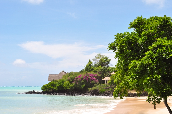 A tropical beachside scene blooming with green vegetation and bright violet flowers