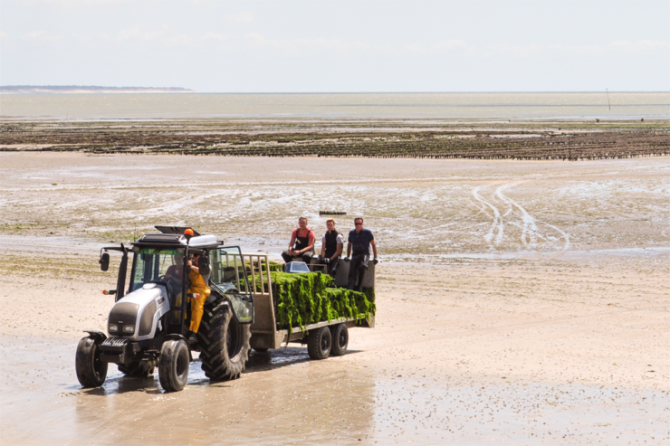 Oyster farmers drive amphibious vehicle up from sea