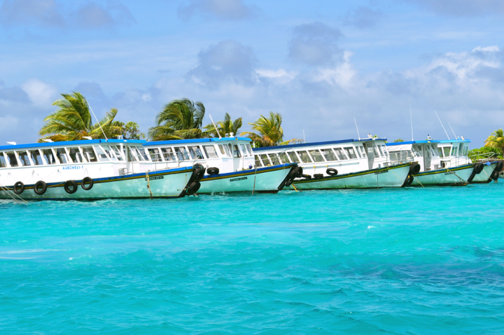 Ferries on aquamarine waters tied to a dock with swaying palm trees
