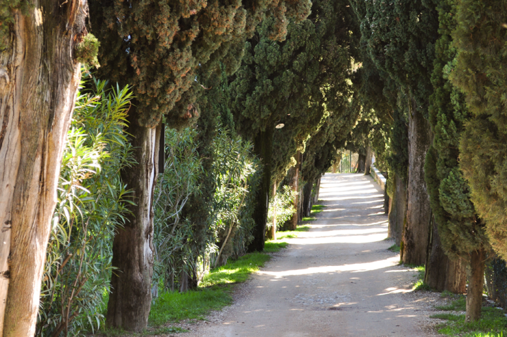 A pathway shaded by cypress trees
