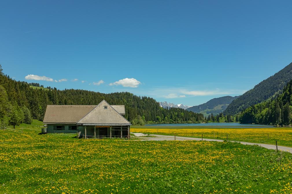 View of an alpine cottage in a dandelion field