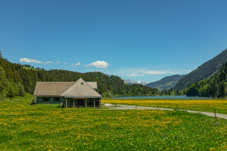 View of an alpine cottage in a dandelion field