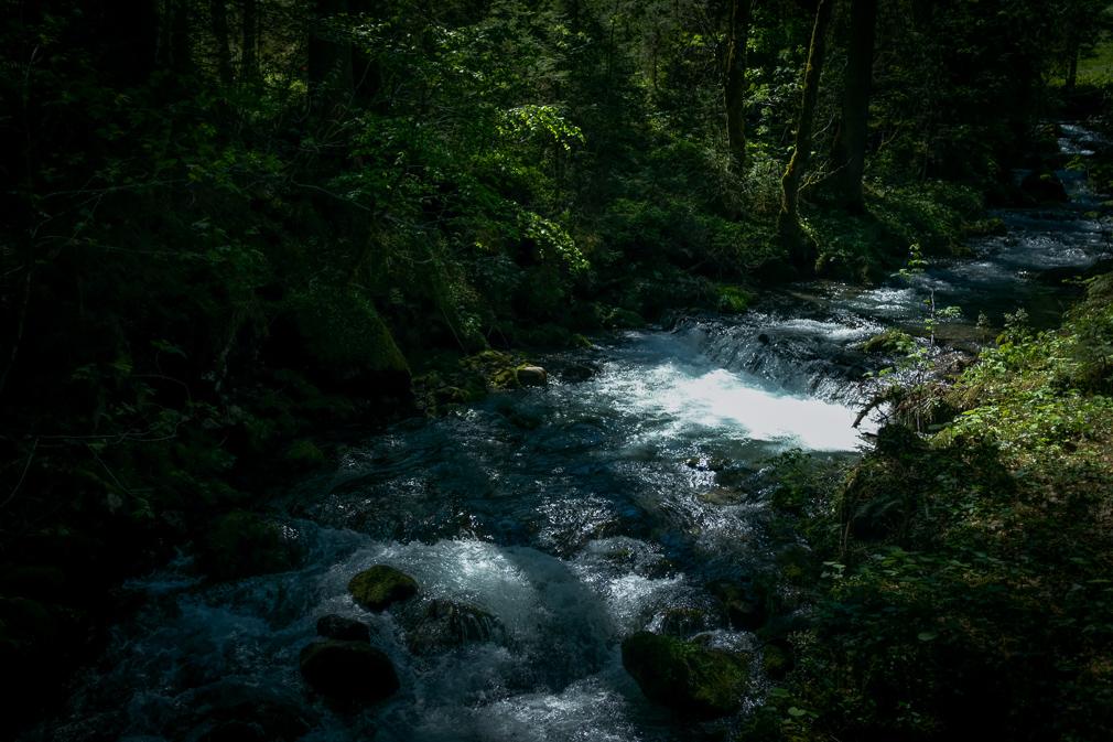 Light dances over a river flower through a forest