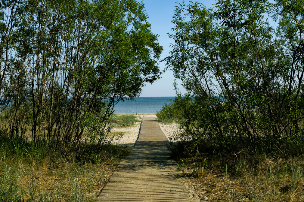Thin trees frame a boardwalk leading to a beach