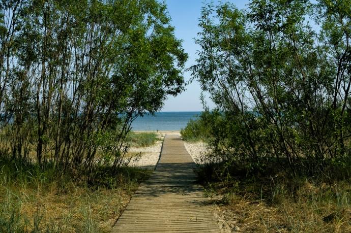 Thin trees frame a boardwalk leading to a beach