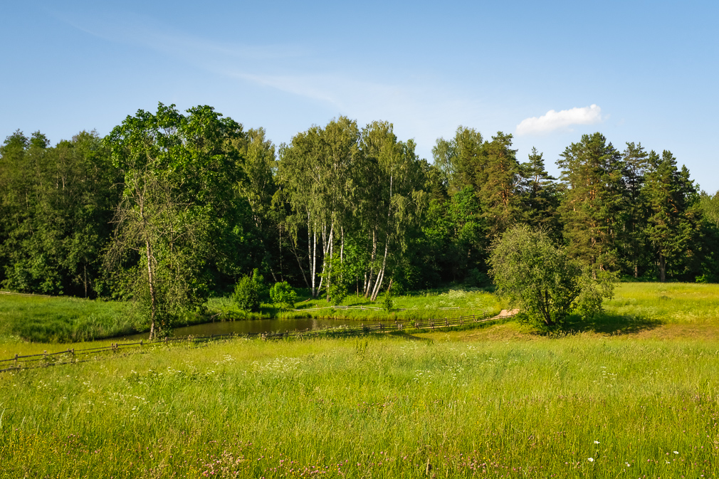 A green, serene landscape of forest and meadow