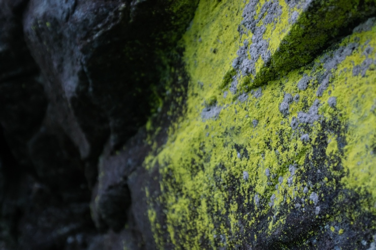 Green lichen growing on stone
