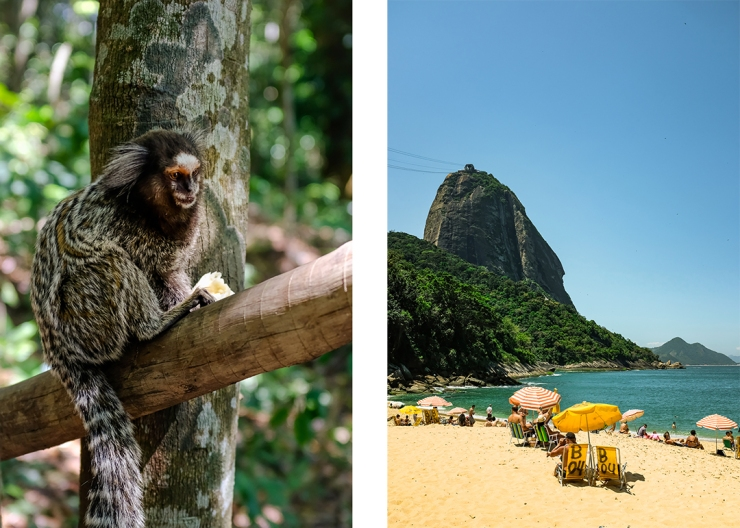 A marmoset eating a banana and a mountainous beach scene