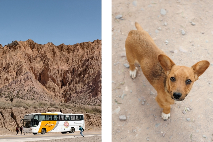 People running towards a bus and a close-up portrait of a dog