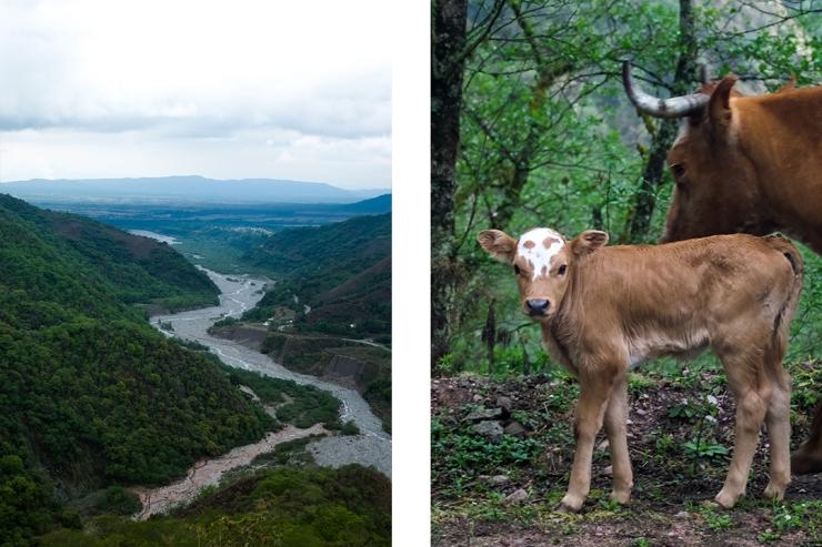 Scenes from northwestern Argentina's yungas biosphere