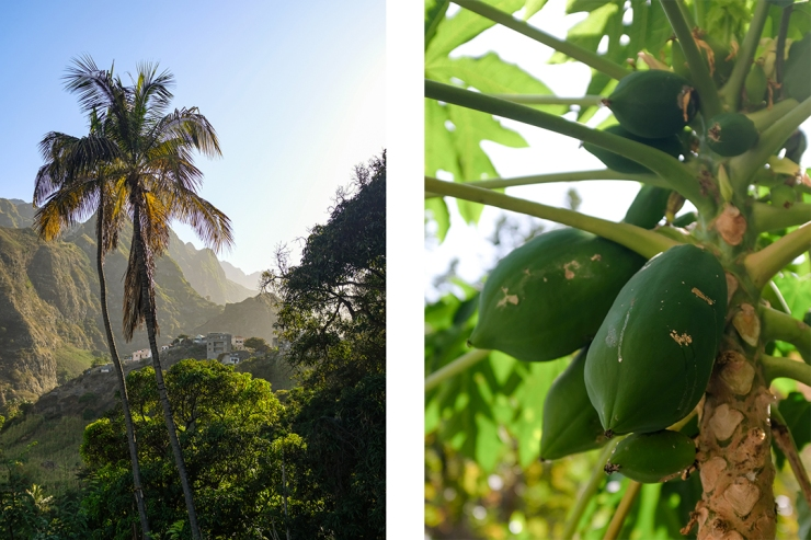 A small village in a tropical, mountainous landscape and a closeup of a papaya tree bearing fruit
