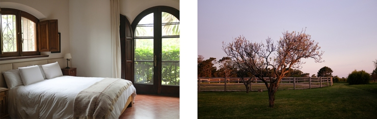 A spacious hotel bedroom and a tree at twilight
