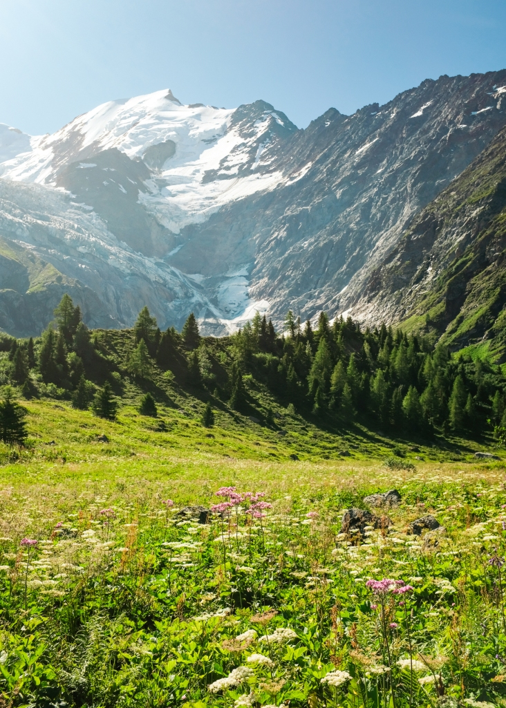 A meadow, forest, and mountain landscape