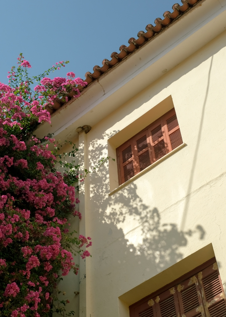 Bouganvilleas climbing up the side of a house