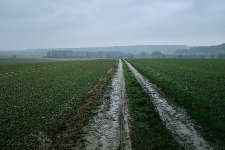 Muddy trails in a rainy pastoral landscape