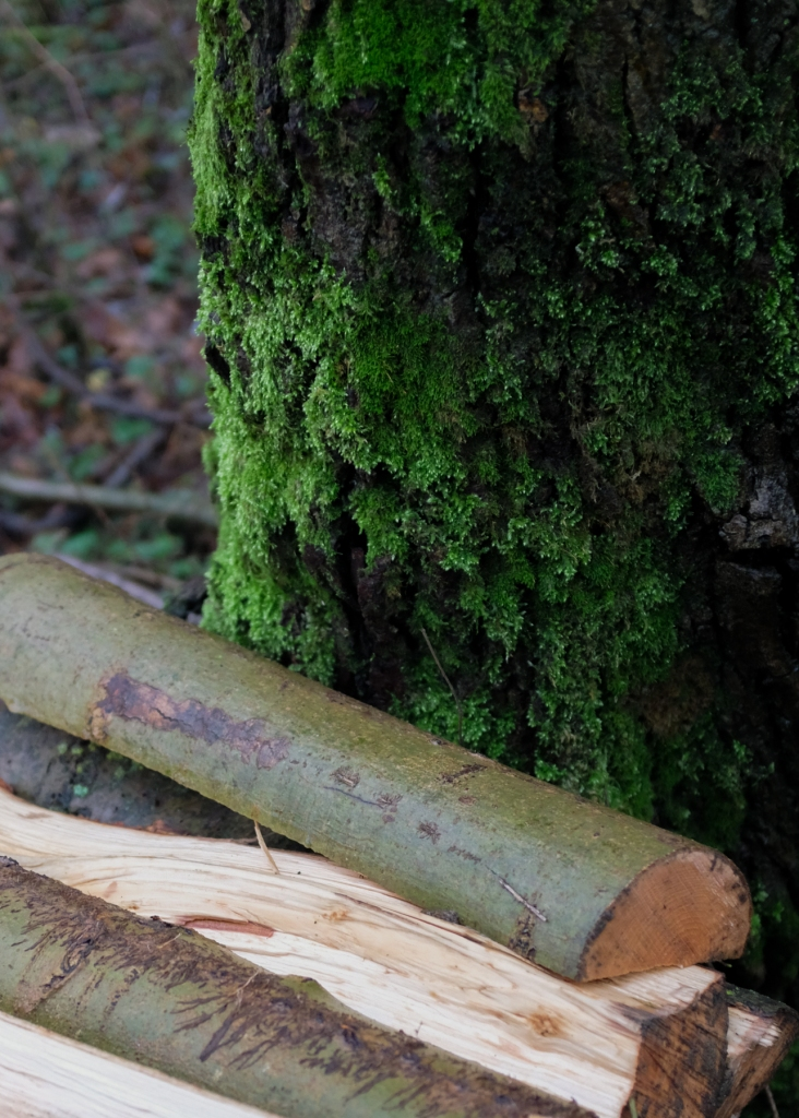 A stack of chopped wood lean against a mossy tree