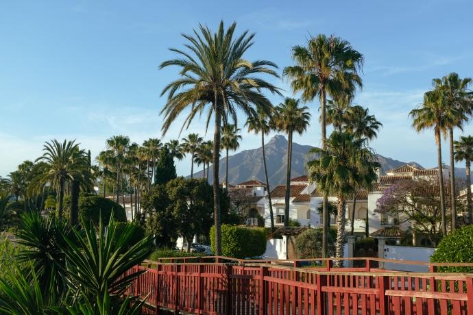 Palm trees along a red boardwalk